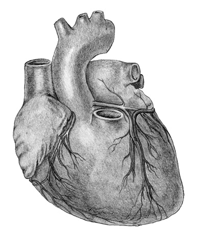 Medical Illustration Fig 3