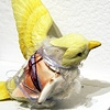 Dreams of Wings - bird 1