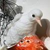 Dreams of Wings - bird 3