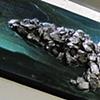 Alligator Rocks -