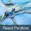 REED PEDLOW