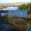 St. Mark's salt marsh