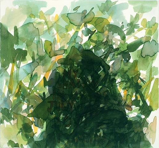 Shadow, weeds