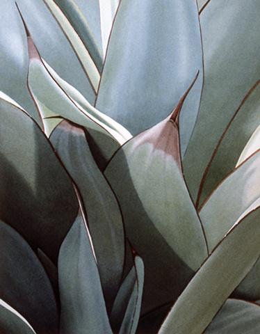 Plant Series #22