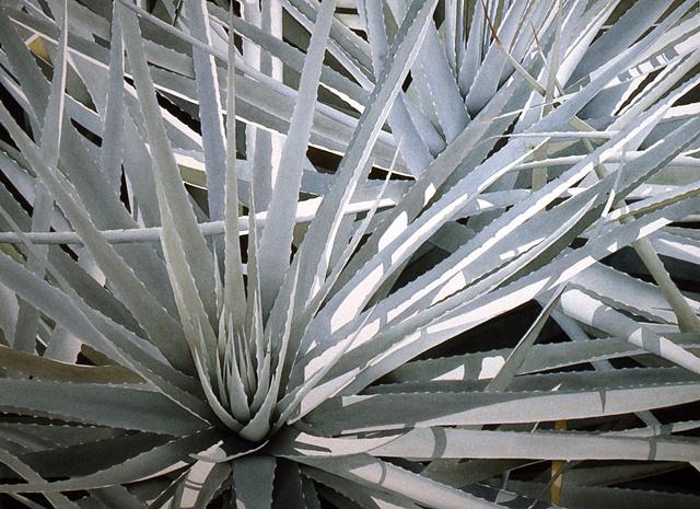 Plant Series #37