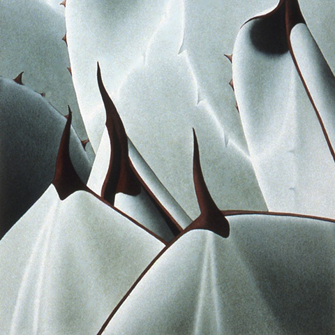 Plant Series #30