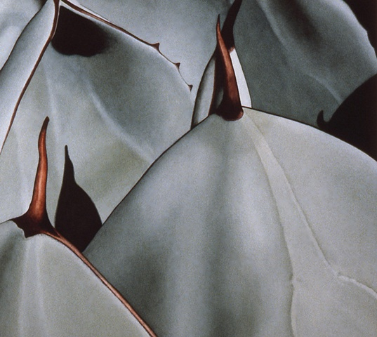 Pllant Series #7, Agave