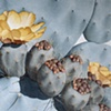 Plant Series#38, Opuntia