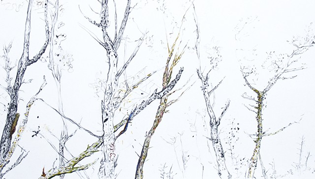 forest drawing detail