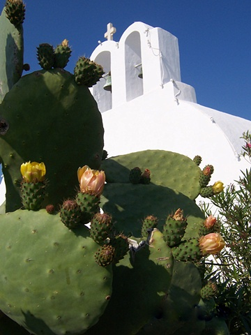 """Beautiful Santorini Cactus and Church"""