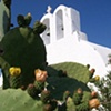 """Beautiful Santorini Cactus and Church"""