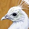 baby skeleton riding white peacock
