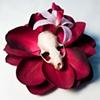 skull flower 6