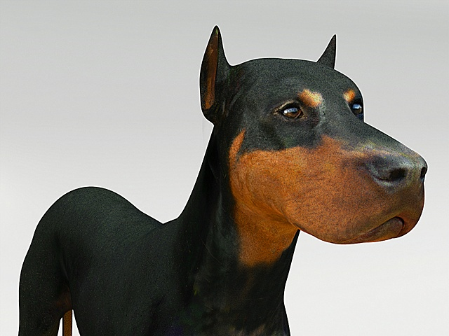doberman3d and texturemap close