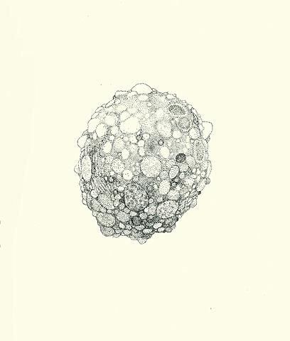 Untitled (Rock #2)