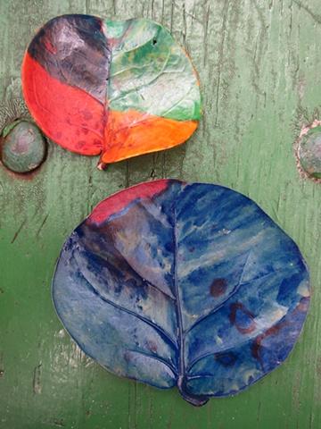 Painted Sea Grape Leaves