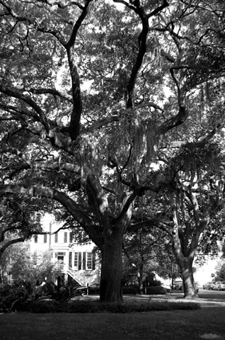 Savannah Oak B&W