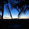 Palm Trees in Mackay