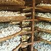 Silk production outside of Da Lat, Vietnam