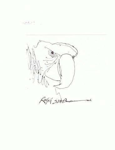 Ralph Steadman - Parrot