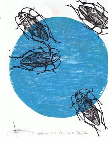 Jose Ortiz - Blanco Azul
