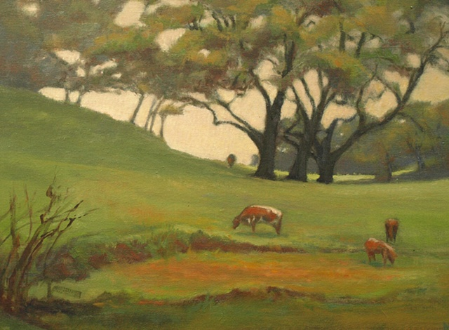 Sonoma Valley Cows