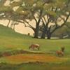 Sonoma Valley Cows