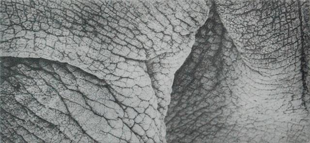 Rhino V