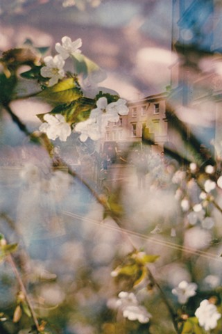A lo-fi multiple exposure film photo of cherry tree flower blossoms and the corner of Cornmarket and Broad Street in Oxford, England.