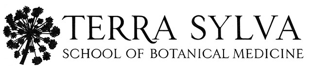 Logo Design  Terra Sylva School of Botanical Medicine North Carolina  Graphite on paper