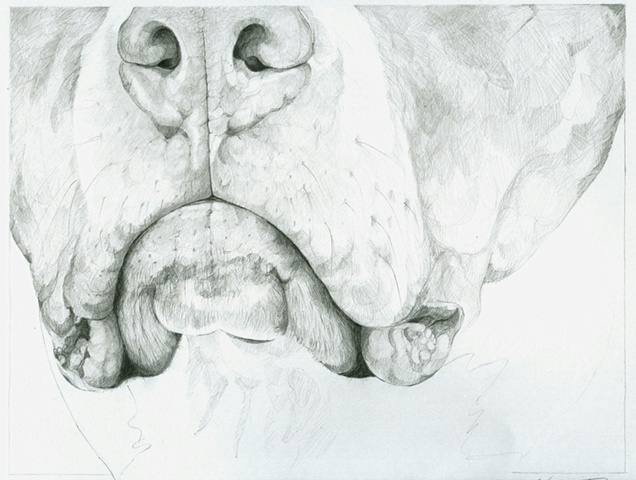 Muzzle - the Guinness Drawings