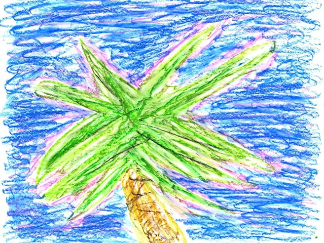 Pastel drawing of a palm tree by Christopher Stanton