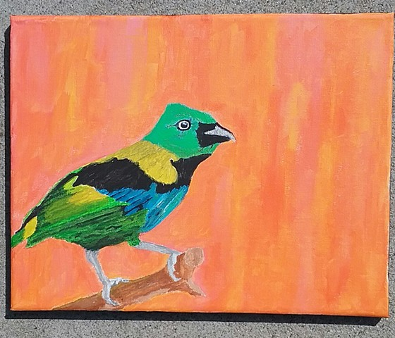 Acrylic painting of a Green-Headed Tanager by Christopher Stanton