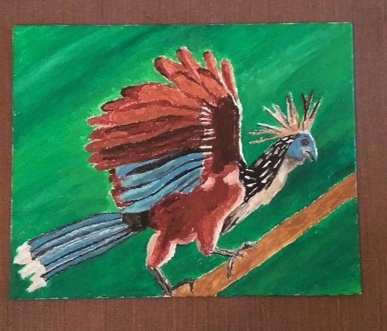 Painting of a Hoatzin by Christopher Stanton