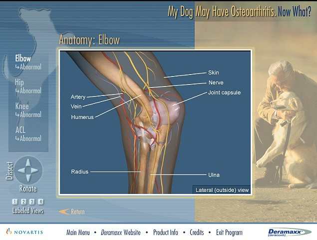 My Dog May Have Osteoarthritis, Now What?
