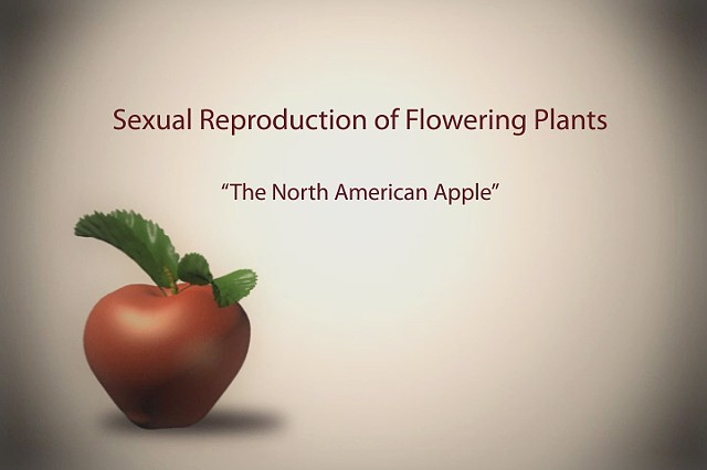 Sexual Reproduction of Flowering Plants: The North American Apple