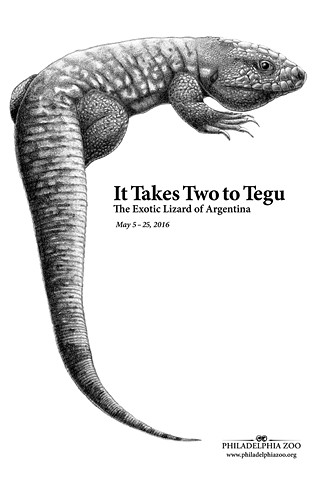It Takes Two to Tegu, Philadelphia Zoo Poster Proposal