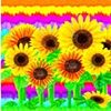 Bouquets, Gardens, and Butterflies
