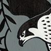 Peregrine Falcons  Hunted Passenger Pigeons