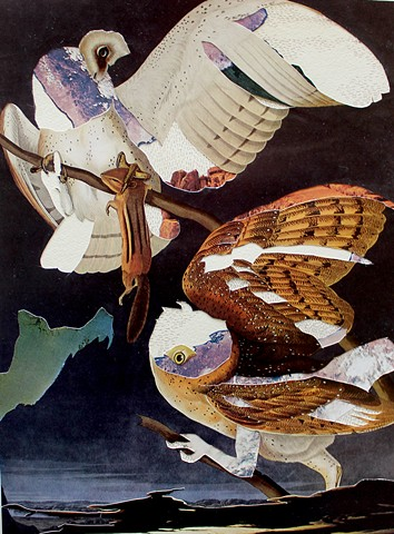 Audubon: Migratory Patterns