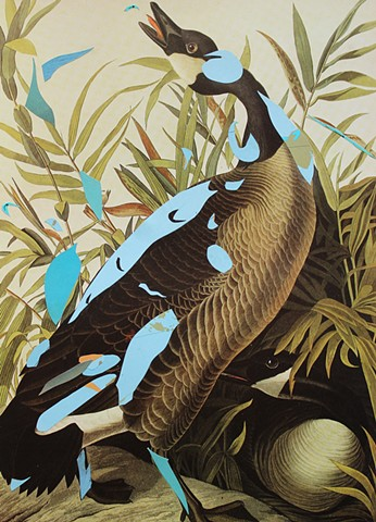Audubon: Nesting Grounds