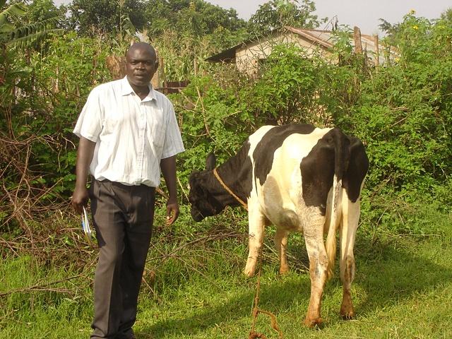 Primary School's Cow + Johnson