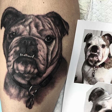 Bull Dog Portrait Tattoo By Steve Hayes Black And Grey Black Gold Tattoo Co