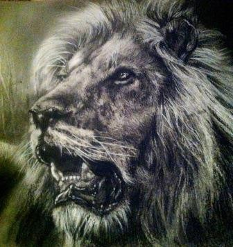 Lion portrait- charcoal