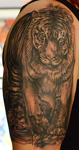 Tiger Tattoo By Josh Lamoureux Black And Grey With Color Crimson Empire Tattoo