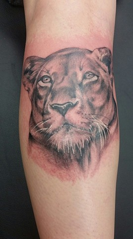 Lioness Tattoo By Ashley Gray Black And Grey Crimson Empire Tattoo