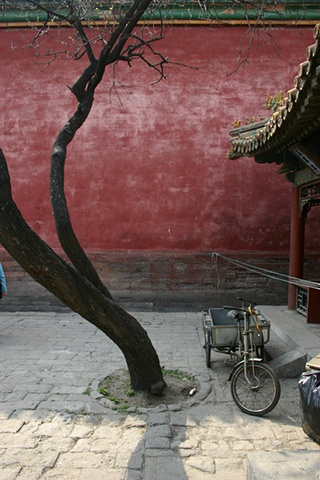 Tree in the Forbidden City