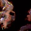 Bacteria_SM_E0_24B