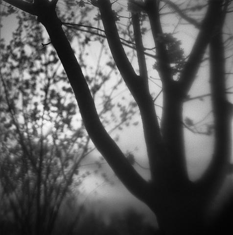 """ Evening Silhouette """