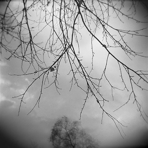 """"""" Decending Branches """""""